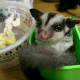 Your sugar glider will love playing and hiding in small containers and boxes