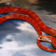 Baby blood red corn snake.  I bought and sold this snake.