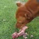 Trachea is often sold with esophagus and other structures, so although the glucosamine levels will be lower, the dog will not mind.