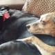 Tigger gives Ebony a cuddle