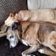 Tigger and Amber snuggling