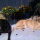 Ebony and Amber relax and enjoy the sunshine