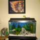 Here you can see the whole set up.  The tank makes a great center piece to a room.  It adds color and life to any home.