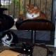 Three cat buddies relaxing.