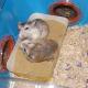 hamsters-communicate