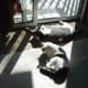 The sunlight is good for them,good for resting and relaxing