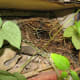 Another pair chose a shelf on the potting bench for their nest.