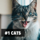 1. Cats