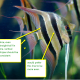 how-to-keep-angelfish-tropical-tank-set-up