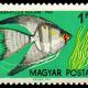 Angelfish Pop Culture