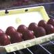Dark Maran eggs