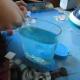 Feeding the sea monkeys!