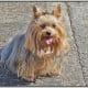 five-really-tiny-dog-breeds