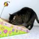 Many cats love corrugated cardboard scratchers.