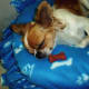 My dog, Gizmo, snoozing on his no-sew pet bed.