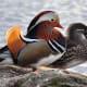 10-colourful-birds