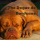 The Dogue de Bordeaux breed is large and powerful.