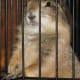 Prairie dog in a cage.