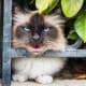 """Hey, cat hater!  Your flowerbed is my litter box.  Ba-ha-ha-ha."""