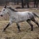 most-unusual-horse-breeds
