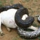 dangerous-exotic-animals-pets