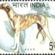 The Indian government issued a postal stamp in respect of this breed.