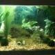 the-many-aquarium-uses-of-plastic-canvas