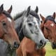If you have enough space for them to run around a lot, horses can become deeply loving and affectionate friends.