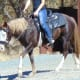 Horse wearing anti buck with a hackamore. She can put her head down, but any further and it will begin to activate. The mare has control of how hard the pressure is on her poll.