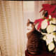 Fortunately, my parent's cat showed no interest in the lovely poinsettias, but it's risky.