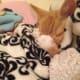 10-reasons-why-you-shouldnt-adopt-a-kitten