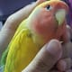 Check out Mumu's wing which looks shrunken and wrinkly. This a sure sign that your pet is molting.