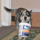 Titan loved his yogurt and did many jobs for us like getting the mail and helping with the shopping