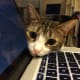 Kitty says you need a time out from the internet. Please?