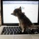 Kitten tries to google herself.