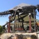 Dino Quest at the Discovery Science Center in Santa Ana, California.