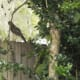 I enjoy birds calling my backyard home.