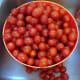 樱桃西红柿是一个欢迎加入我的沙拉加,我在烤箱里装满了一个充满阳光干的西红柿。