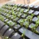 Plant some alfalfa in a keyboard while a coworker is on vacation.