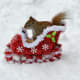 The sleigh is full!  Get going!