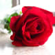 """A single red rose represents devotion to a passionate relationship. It could say to your partner: """"You're the only one for me. Be mine."""""""