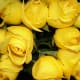 """Yellow roses have more of a place as a """"Get well soon"""" than as an """"I love you."""" As beautiful as they are, save them for hospital visits or your friends!"""