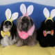 Our new Easter bonnets