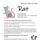 "The Batch #1 templates also includes this information sheet that tells a little about the year of the Rat and includes the Chinese character for ""rat."""