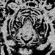 Chalk effect on tiger photo. Looks like it was drawn on a blackboard using chalk.
