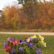 LIVING FLOWERS