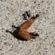 Ants dragging their prey away, Iizaka onsen, Japan