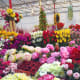 Artificial plants are very popular nowadays as well. For example, those of exotic oriental blooms like peonies.