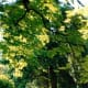 Beautiful trees in Stanley Park