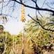 Australian Grass Tree ( Xanthorrhoeaceae)